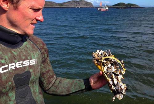 Luke Saddler holding the barnacle-encrusted flip-flop