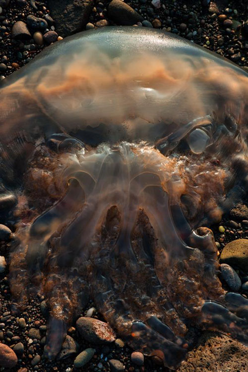 The picture shows a jellyfish looking remarkably out-of-this-world