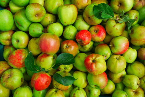 If you donate your spare apples you'll be given free cider