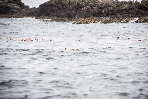 230 flowers were thrown into the sea - one for every life saved