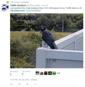 Crow ruffling feathers