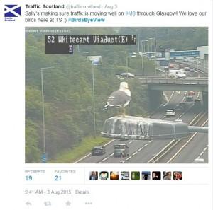 Sally the seagull