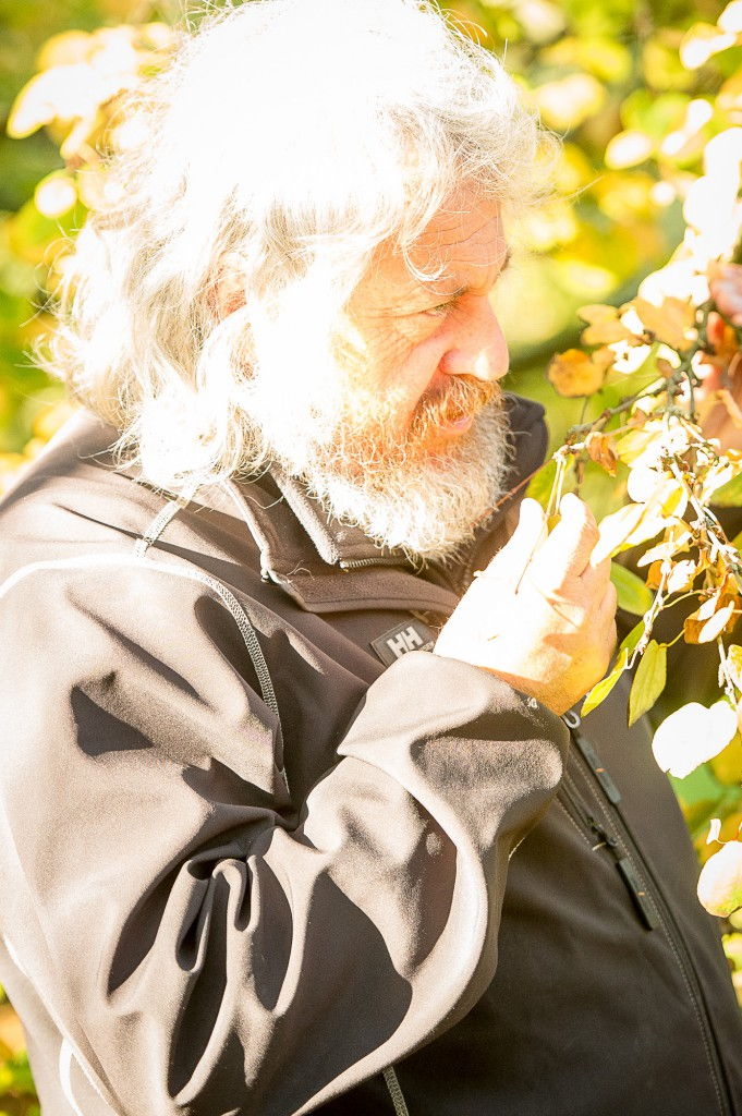 IN PIC................. David Knott of the Botanic gardens with the Katsura tree. (c) Wullie Marr/DEADLINE NEWS For pic details, contact Wullie Marr........... 07989359845
