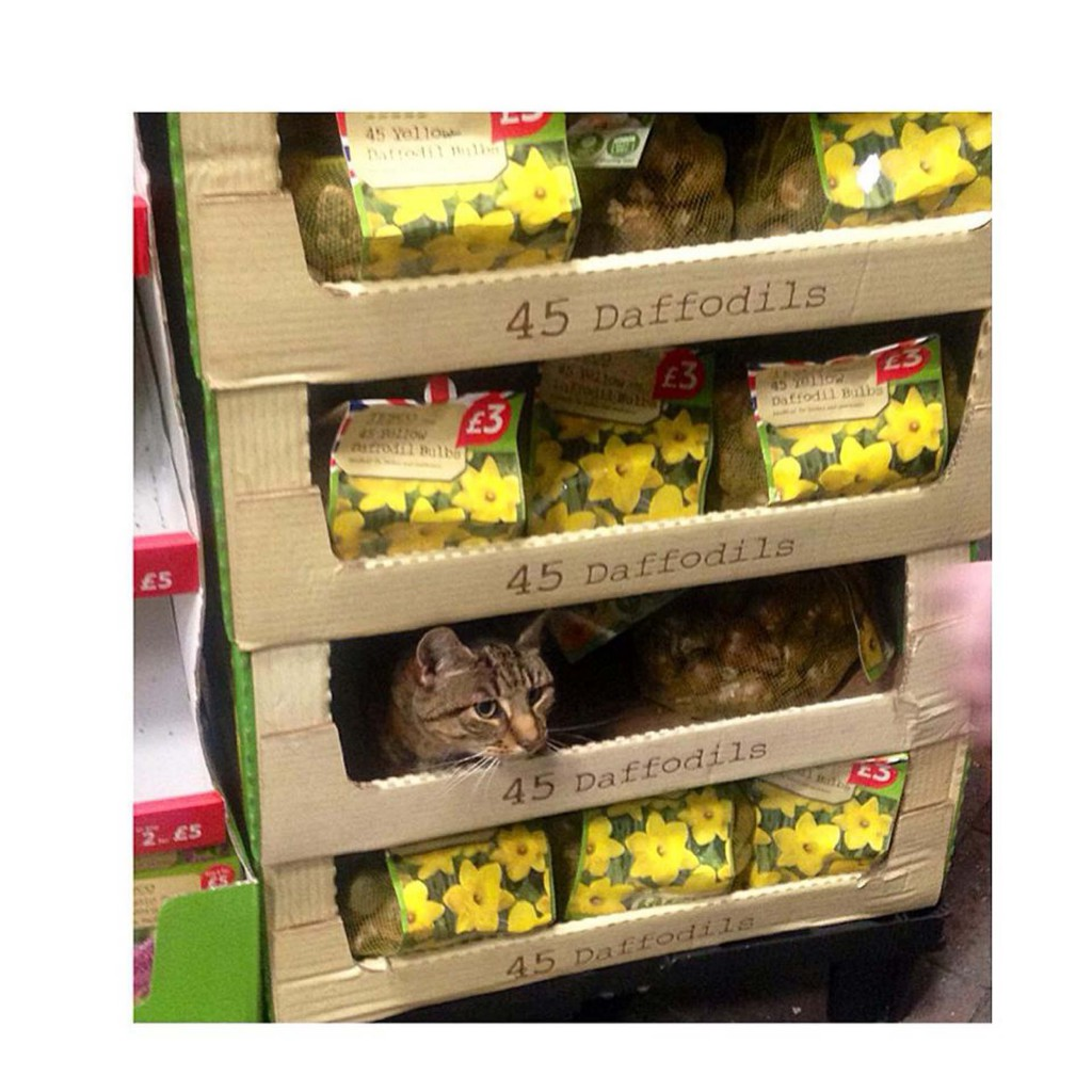 FUDGE_TESCO_CAT_DN03