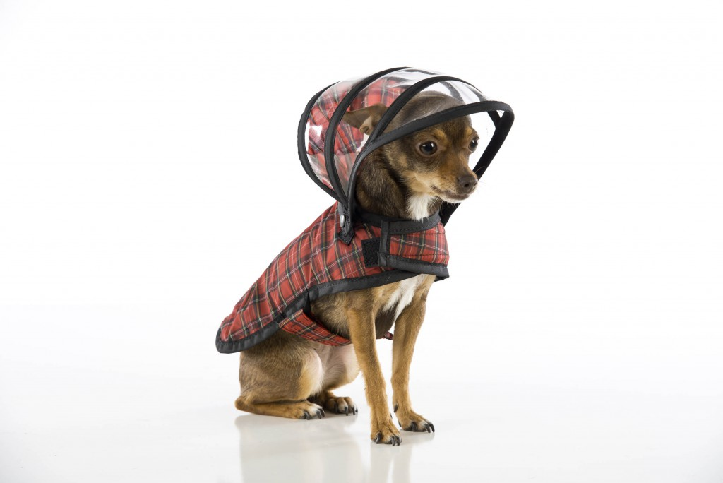 DOG raincoats complete with hoods are the latest creation for pampered US canines coming to Britain. The Push Pushi raincoat, which comes in camouflage, tartan and even glow-in-the-dark yellow, is already a massive hit in the US and now UK dog lovers have started buying them too. The small family owned business in Santa Rosa, California, designed the raincoats in a bid to not only protect dogs from harsh weather conditions but to keep them looking stylish while doing so. The company recently expanded its operation to the UK and reckons the generally harsher and less predictable weather of Great Britain has made them popular with dog lovers. The coats, which cost between £26 and £38, come in a multitude of colours and are available in a range of sizes to fit most breeds of dogs. They even have detachable clear hoods to protect pooches from rain and snow getting into their eyes and ears.