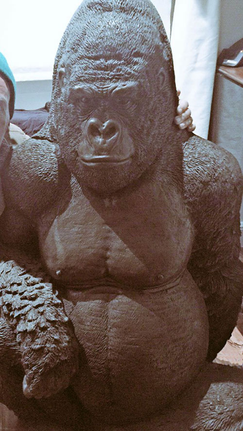 Andre is a 6-ft high gorilla model
