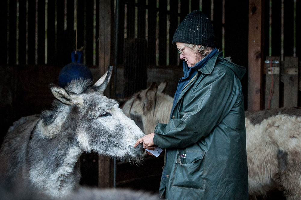 Mione cares for one of the donkeys at the farm