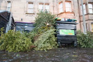IN PIC................. Christmas trees dumped for uplift in Edinburgh, blocking the roads and footpaths (c) Wullie Marr/DEADLINE NEWS For pic details, contact Wullie Marr........... 07989359845