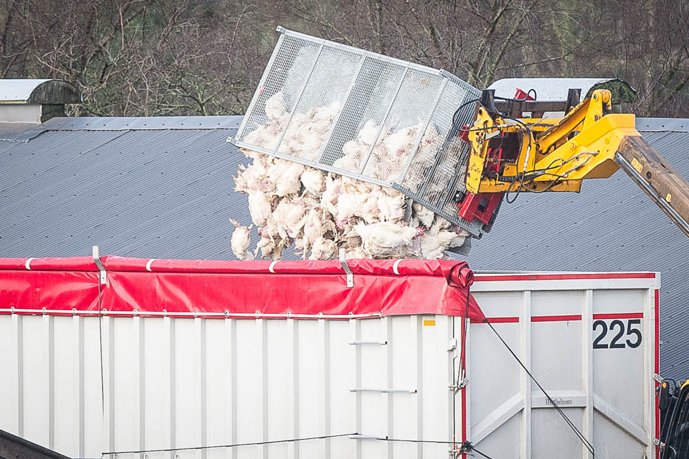 The bodies being loaded onto a truck
