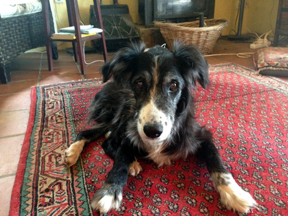 Badger, the dog lined up for the role, sadly passed away
