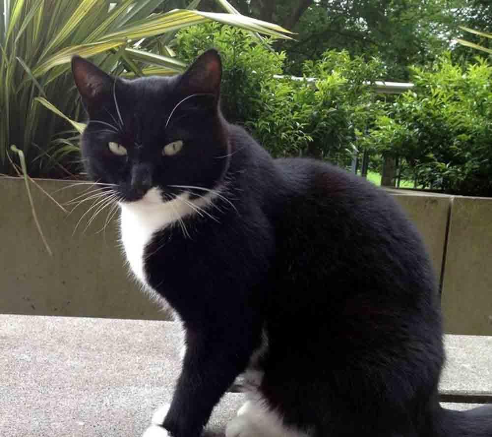 CAT 1 ED