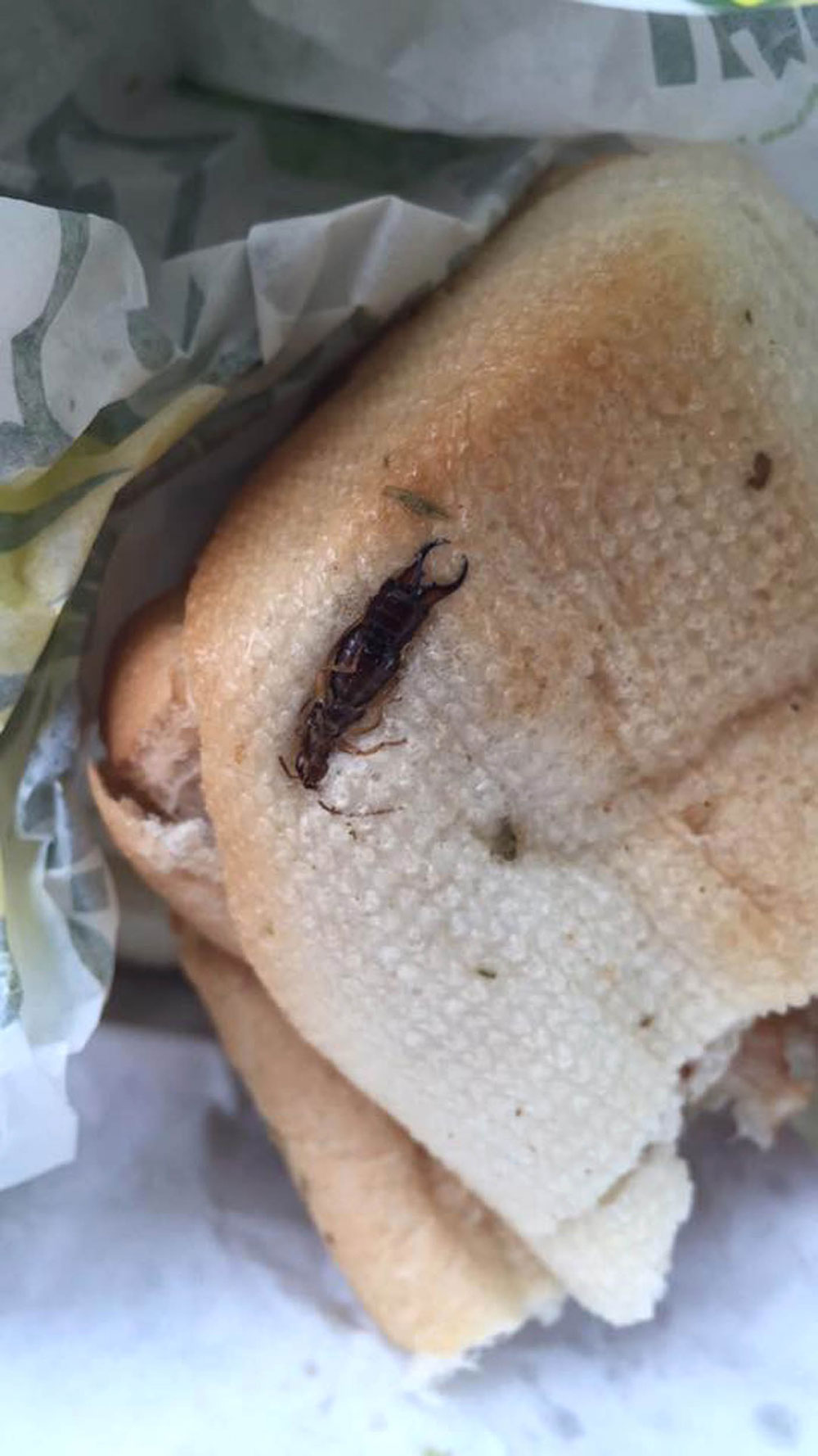 The giant earwig was embedded in the sandwich