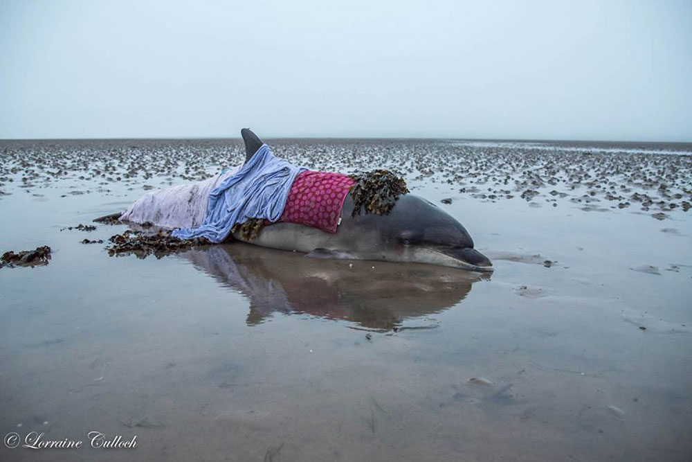 Rescuers draped her in damp cloths to try and reduce the damage