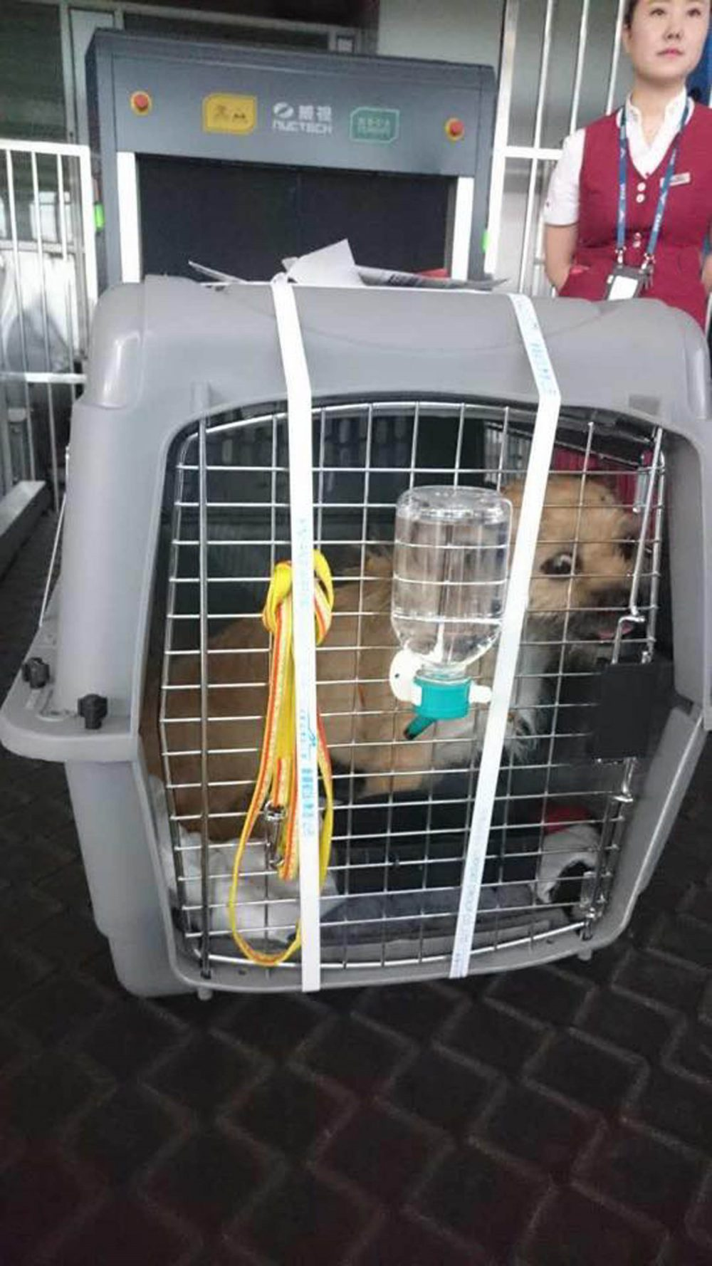 Gobi has been left well equipped for her flight with water and her owners socks for company. Credit: Facebook/Bring Gobi Home