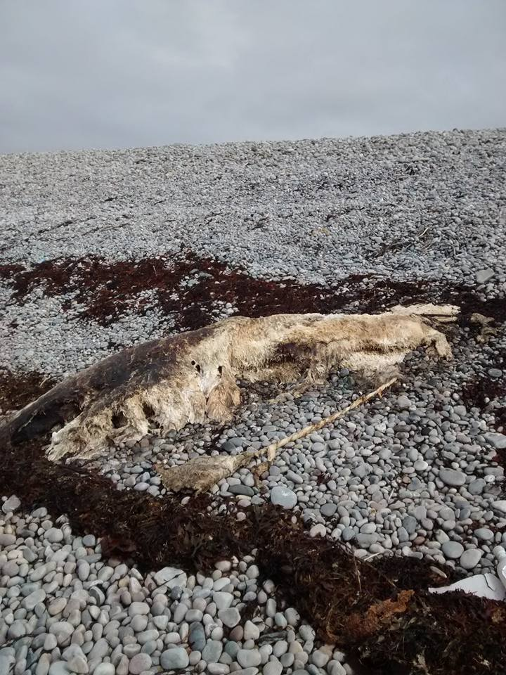 Part of one of the beached 'polar bears'
