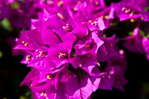 The beautiful flora around Greek island yoga retreat