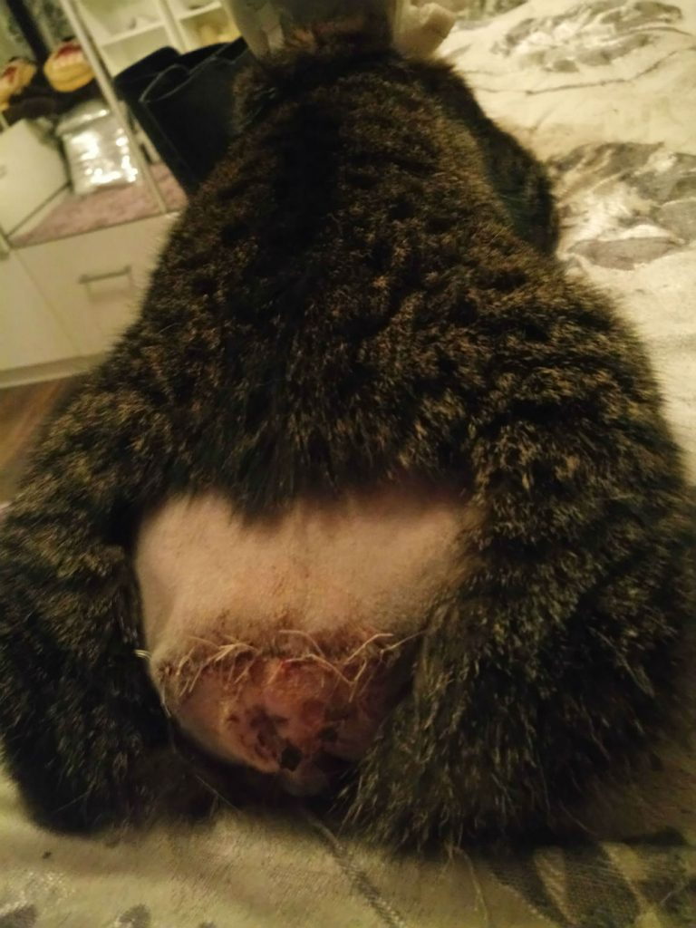 Fundraiser for cat attacked in East Renfrewshire