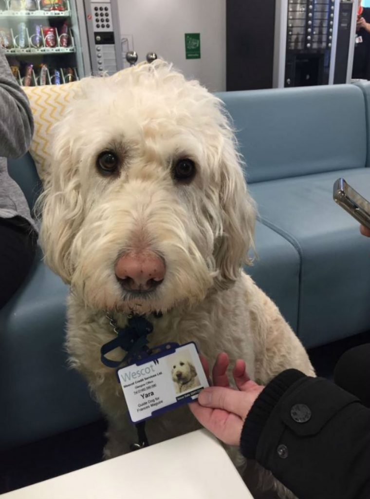 Guide dog gets ID badge for work