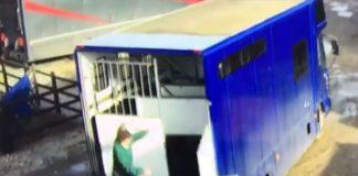 horse trailer door