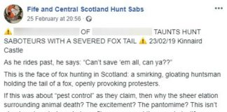 "Video shows fox hunter brandishing severed tail and boast: ""You can't save them all."""