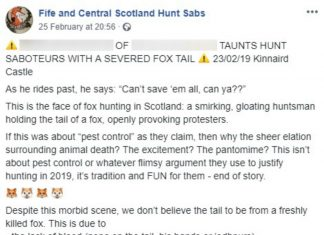 """Video shows fox hunter brandishing severed tail and boast: """"You can't save them all."""""""