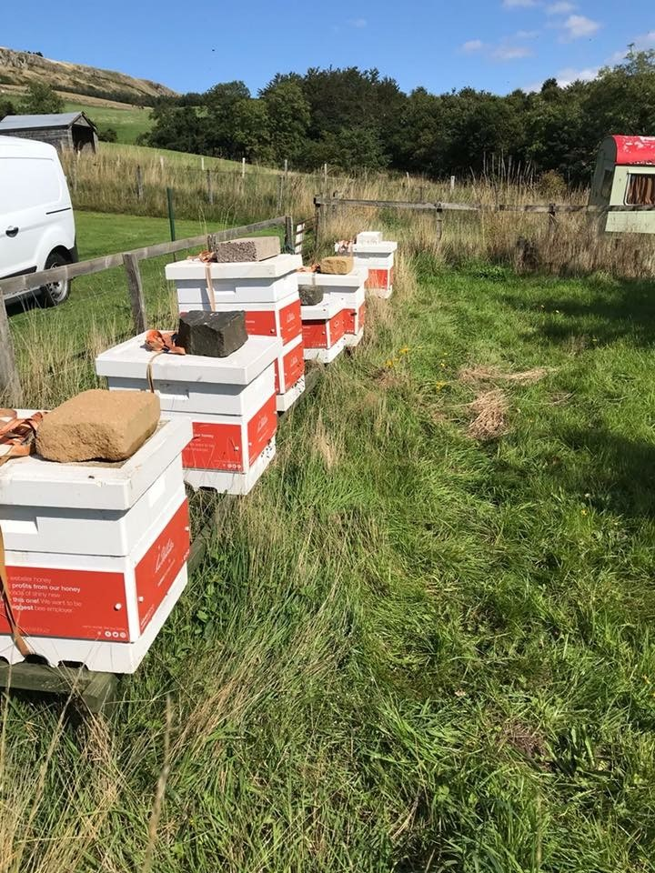 A SERIAL entrepreneur and his partner have seen un-bee-lievable growth of their sustainable honey business. Daniel Webster, 25, and his partner Emily-Kate McDonnell from Kinross launched Webster Honey in 2015  after a discussion about eco-friendly and sustainable businesses.
