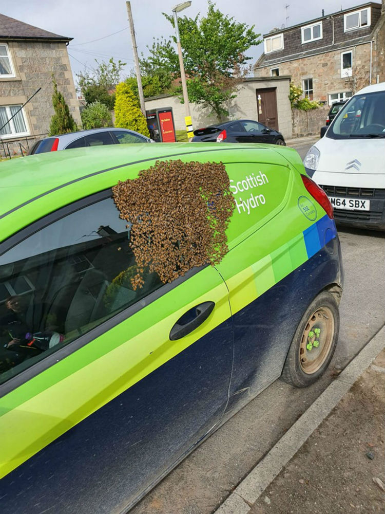 20,000 bees on an SSE car