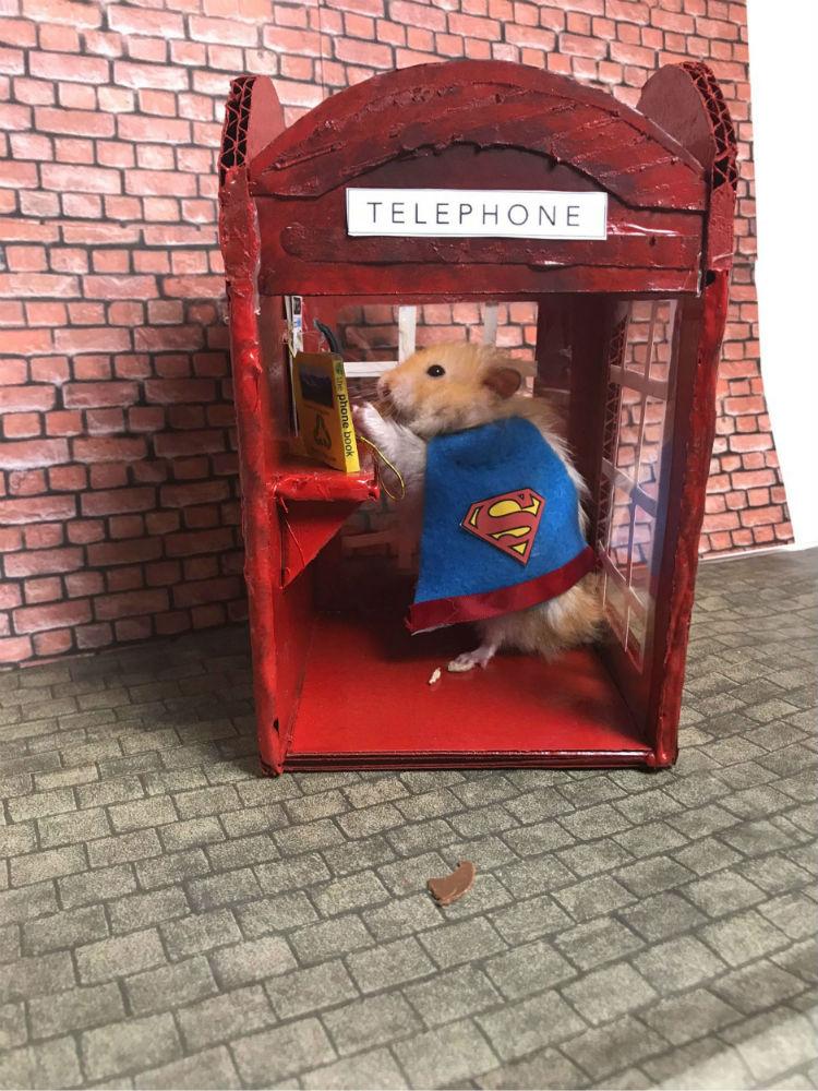 Superman hamster