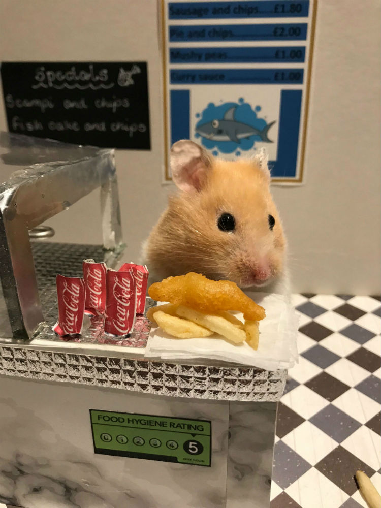 Hamster with mini fish and chips