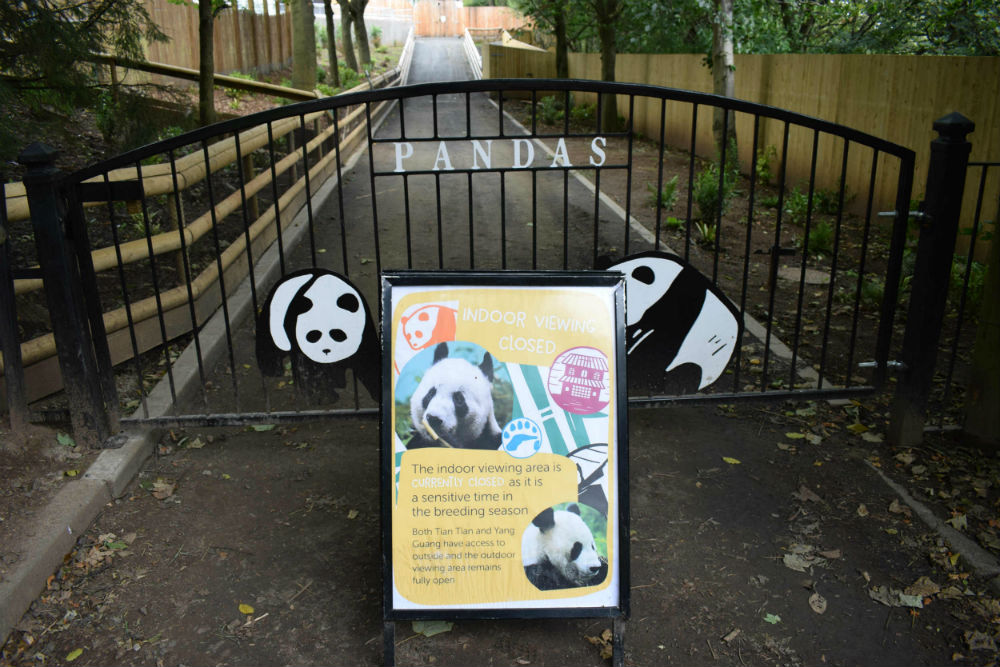 Edinburgh zoo pana enclosure closed