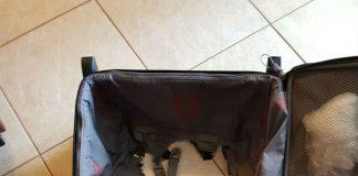Ripped bag