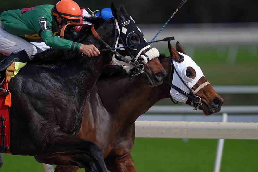 Irish horse racing betting guide west brom vs arsenal betting tips