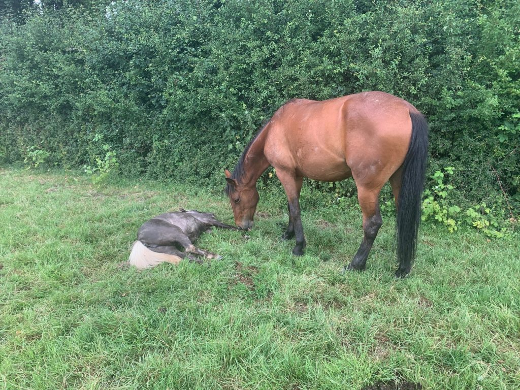 A five-year-old girl was left traumatised after she saw her 9-year-old pony dying and covered in blood