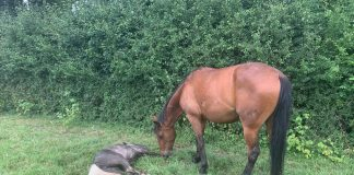 A pony discovered brutalized by it's owner| By Deadline News- Viral News England