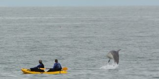 The father and son-in-law watched in disbelief as the Bottlenose Dolphin breaches the sea