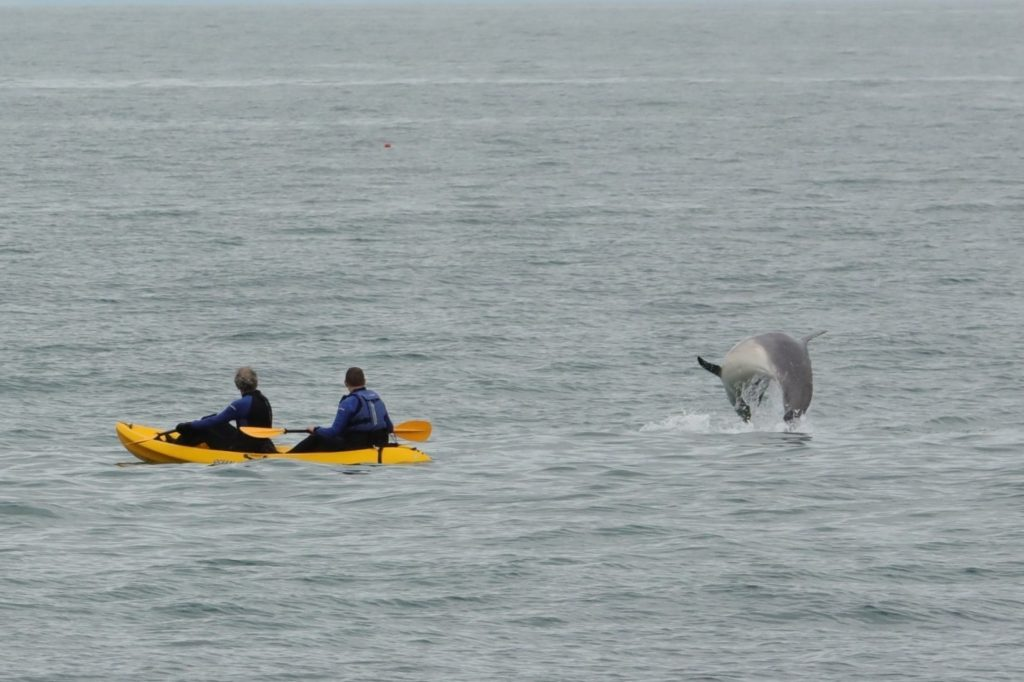 Kayakers  watching a dolphin jump out of the water just metres from them