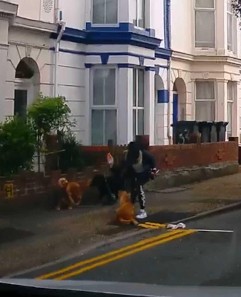 Woman hitting dog