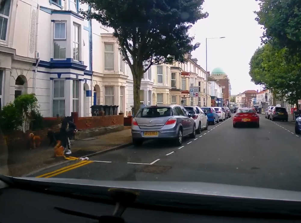 Woman pinning dog