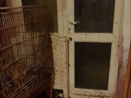 Emma Maliska broke into her neighbour's house to rescue over 22 animals living in horrid conditions