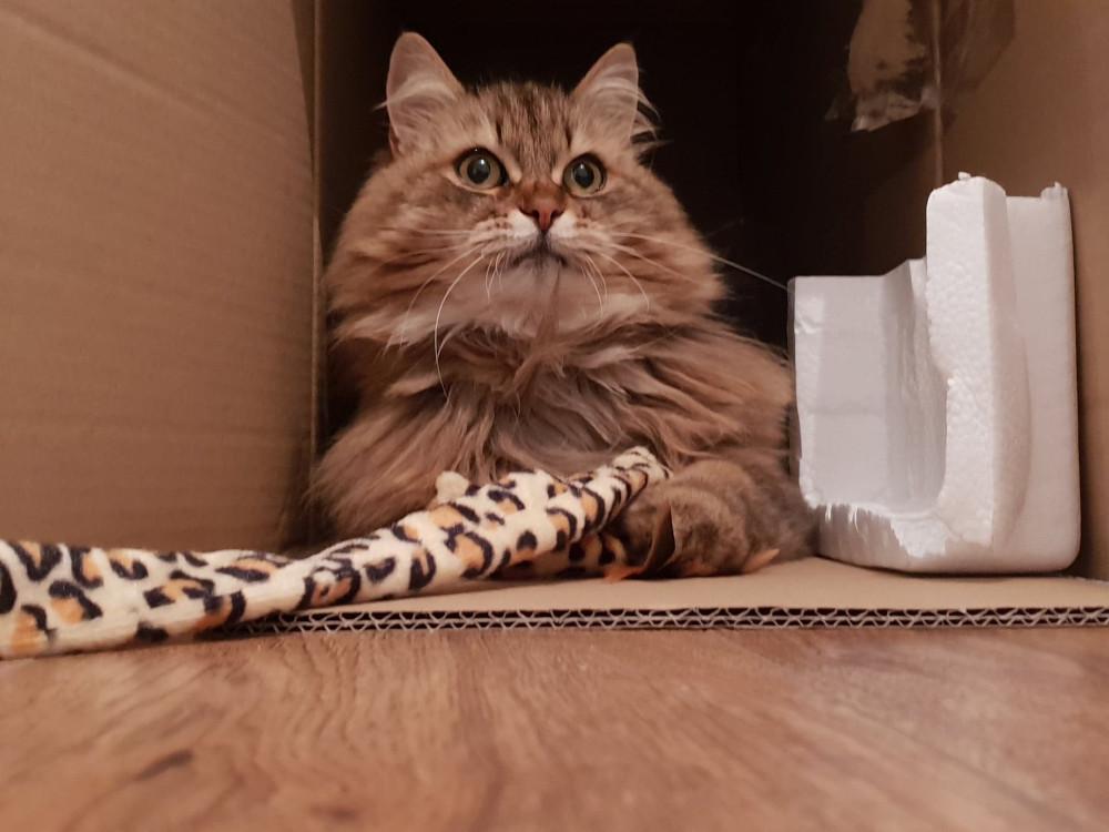 Tula Toby Carvery Cat