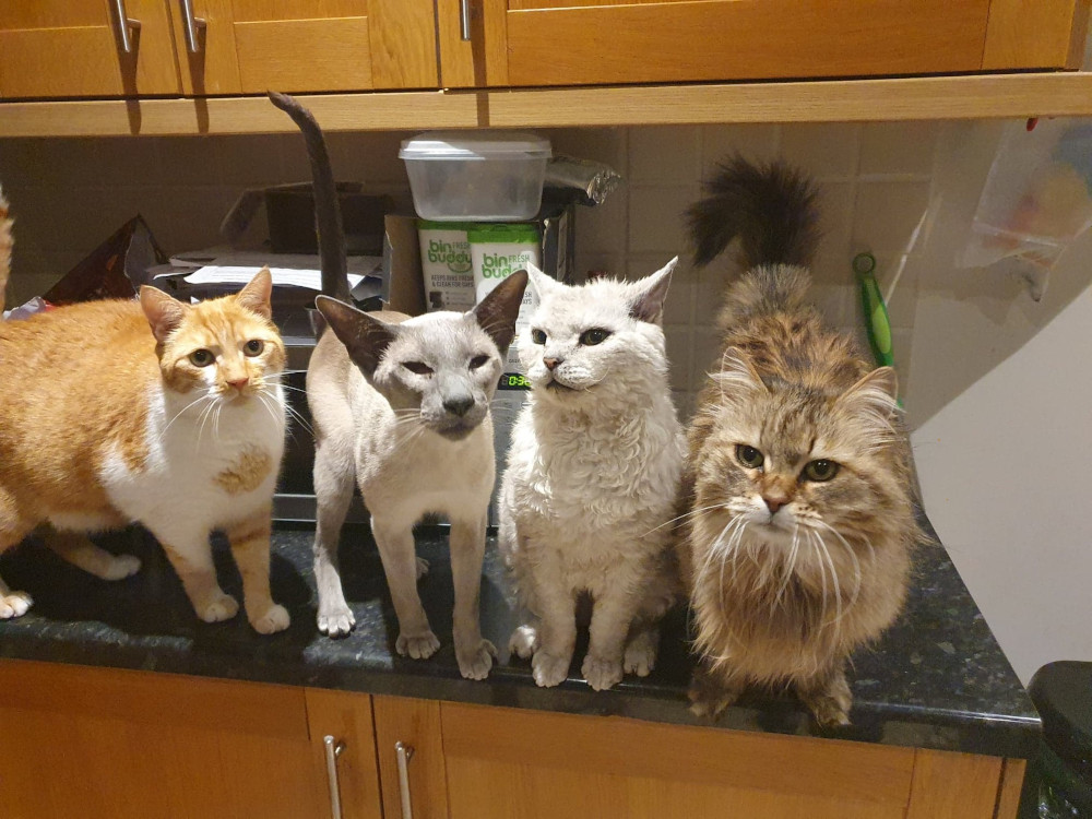 Tula with the rest of Nicole's cats