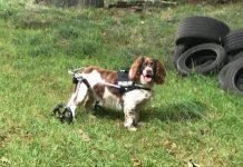 Keisha with wheels- Viral News