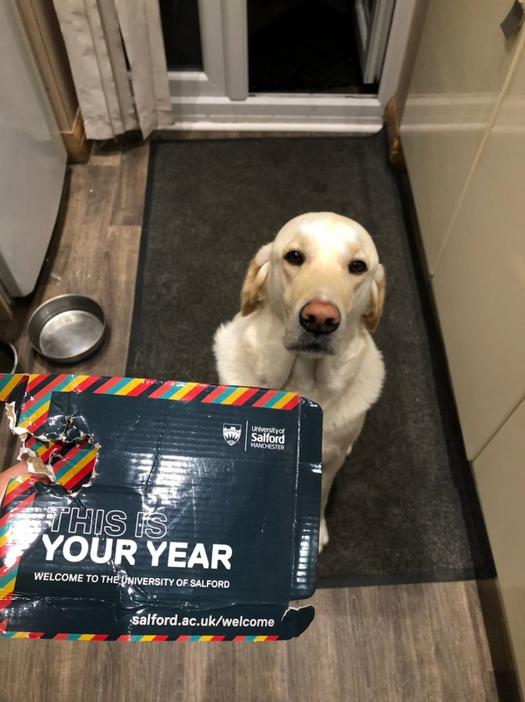 "Labrador who chewed up his owner's welcome pack made ""honourary student"""