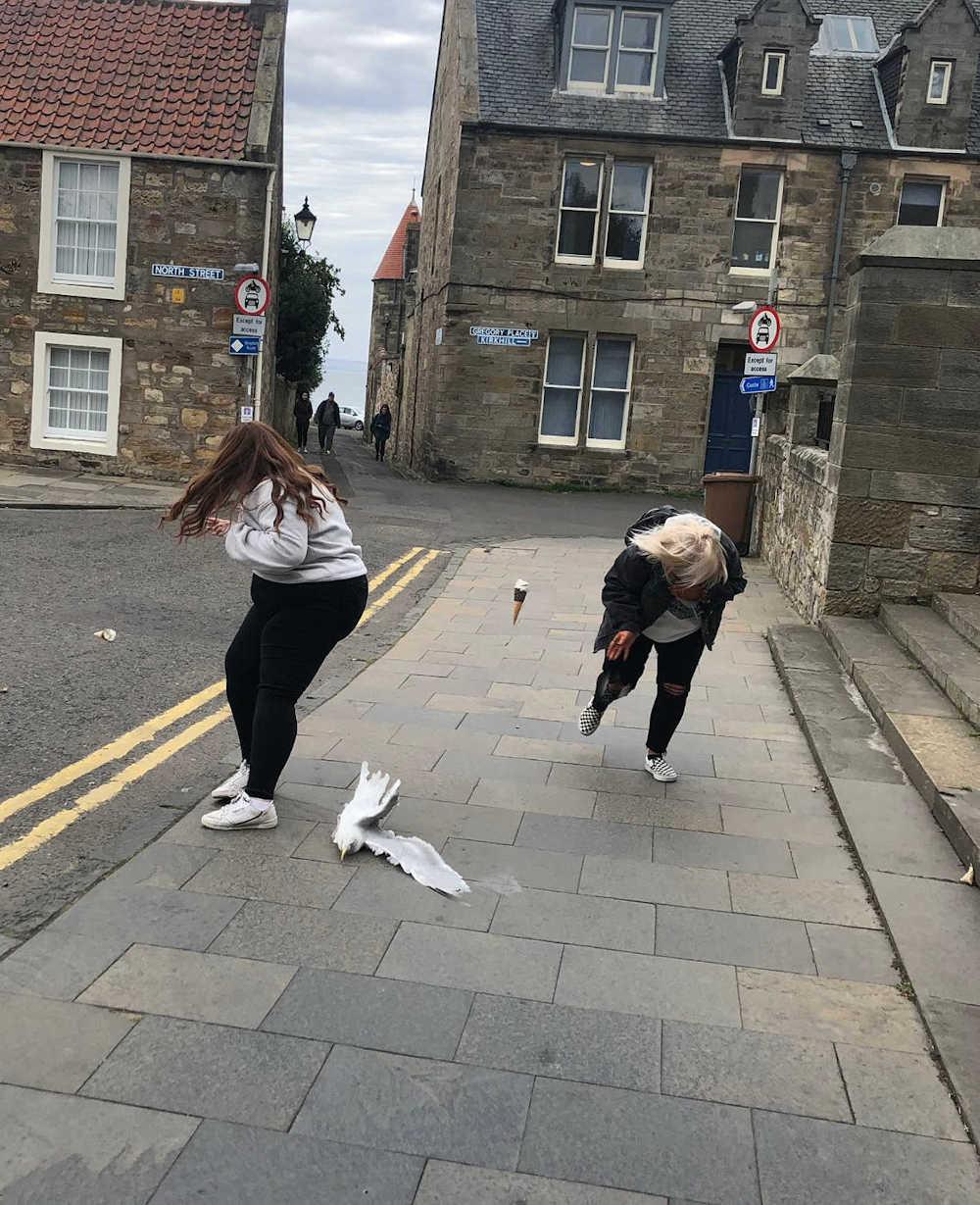 Seagull divebomb