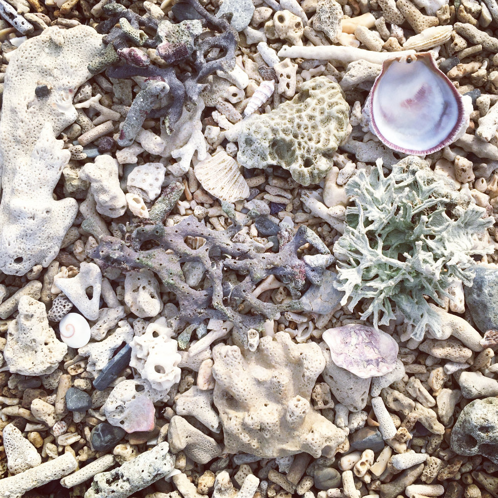 Bleached coral on beach