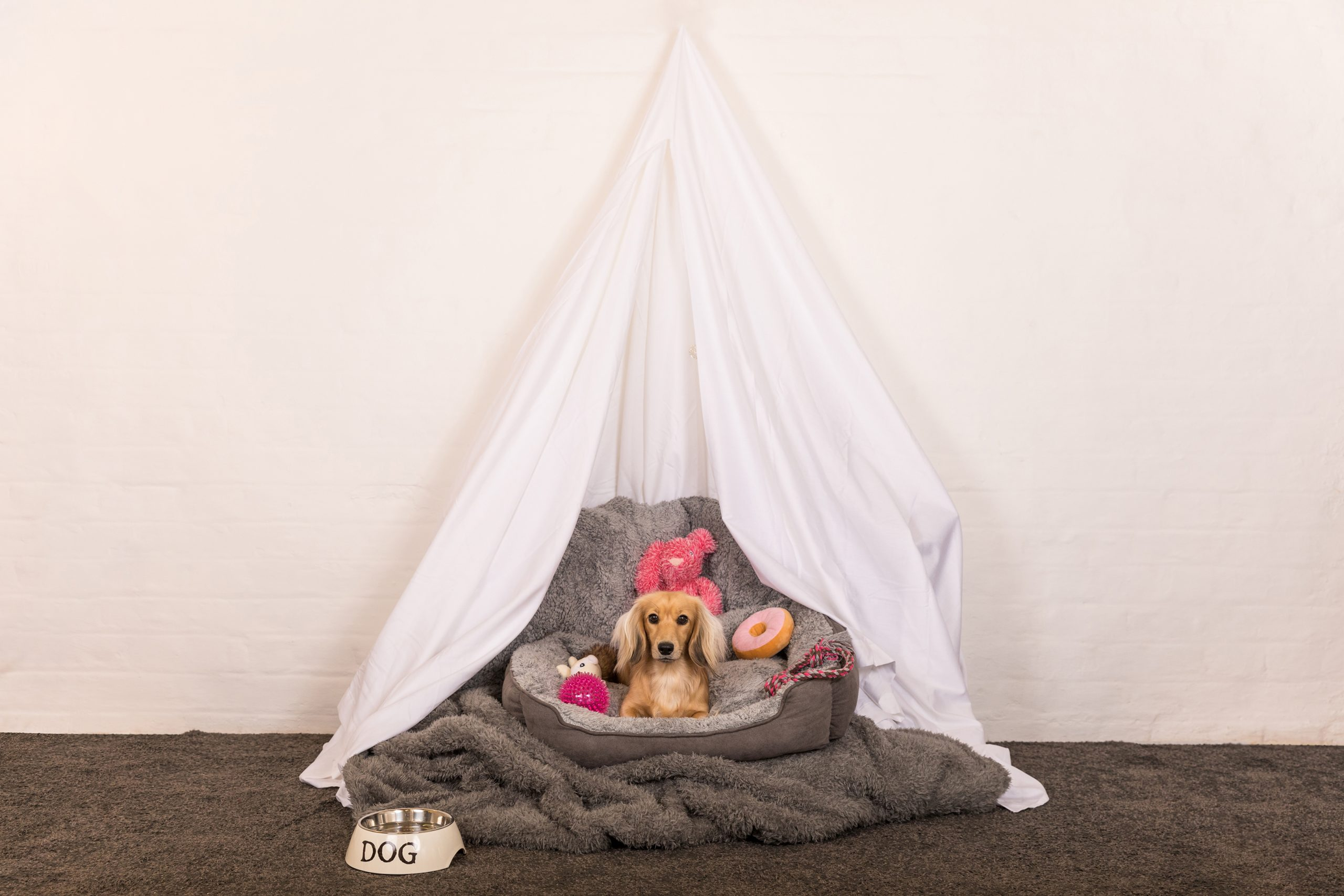 Cosy cave for dog