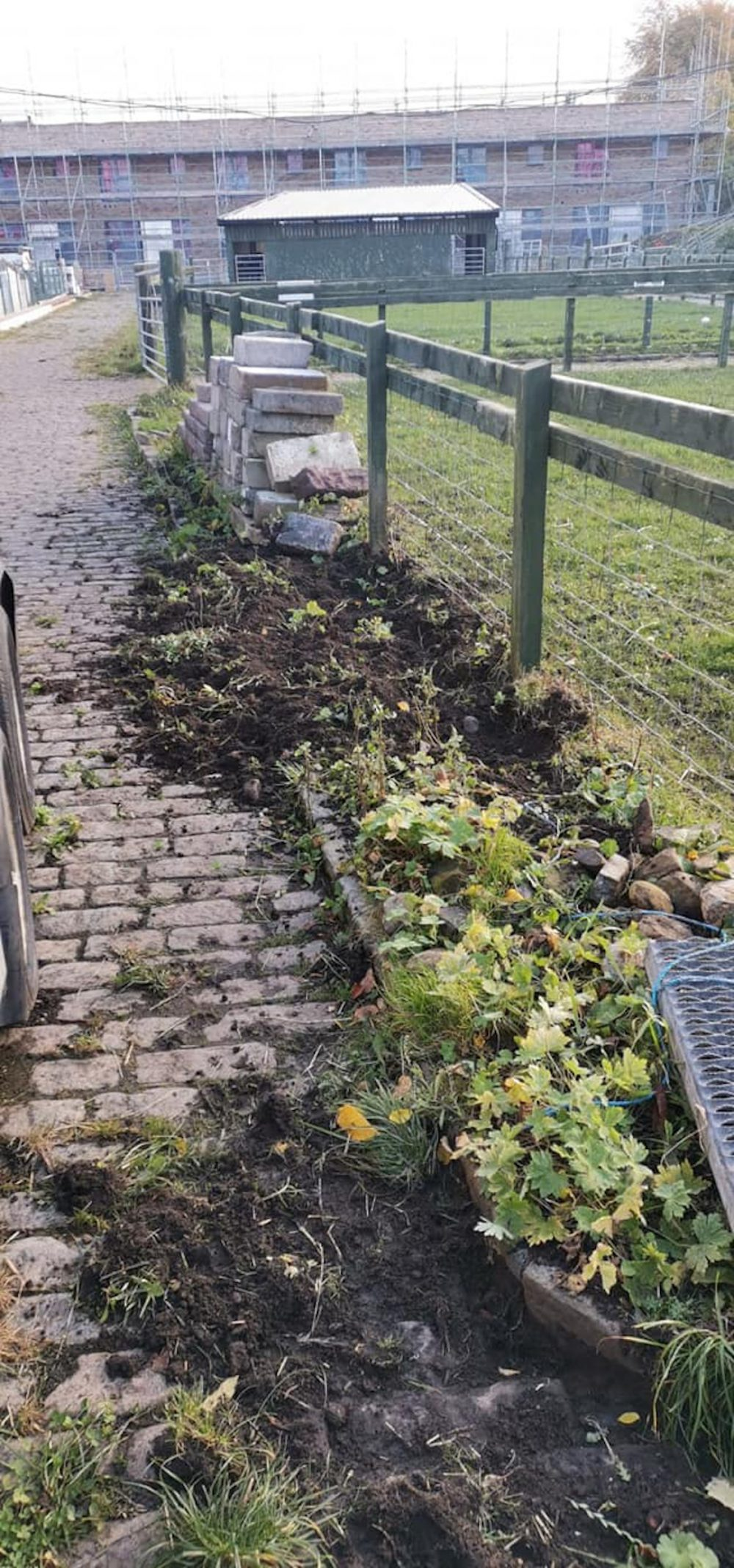 Damaged verges left by the pigs - Scottish News