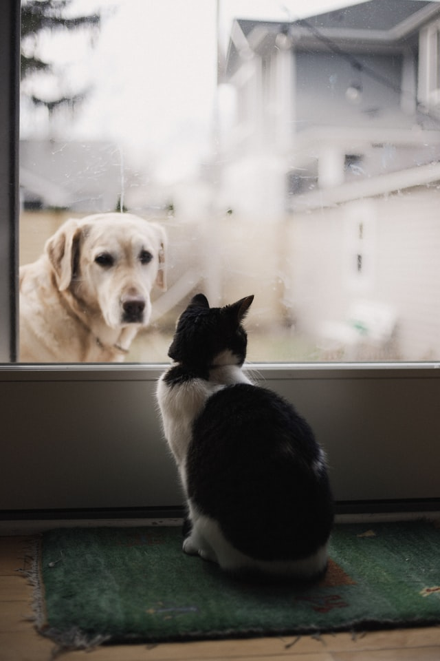 Cat and dog- Scottish News