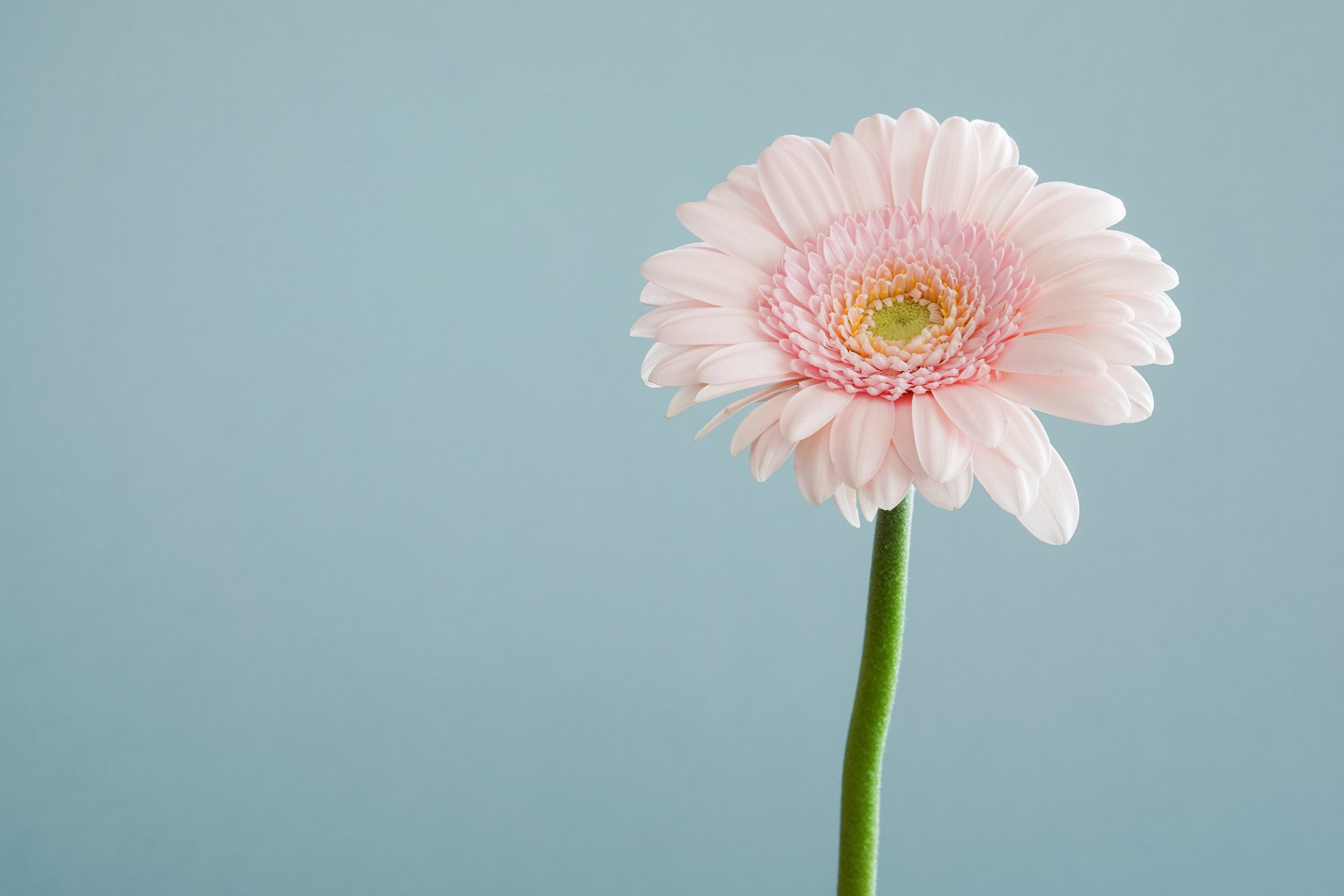 Picture of a flower