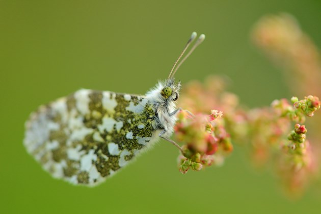 A butterfly- Nature News Scotland